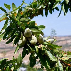 growingnutcrops1